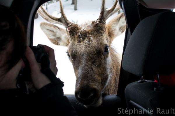 Les cervidés du Parc Oméga | Escapades et idées vacances au Québec pour toute la famille
